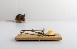 piege-souris-appat-au-fromage-petite-souris-bois-apodemus-sylvaticus-floue_159132-756